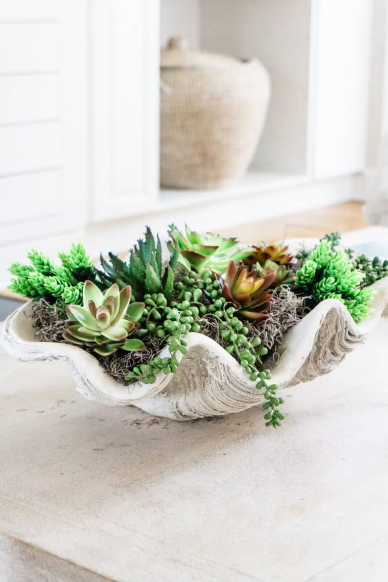 Large Clam Shell with Succulents