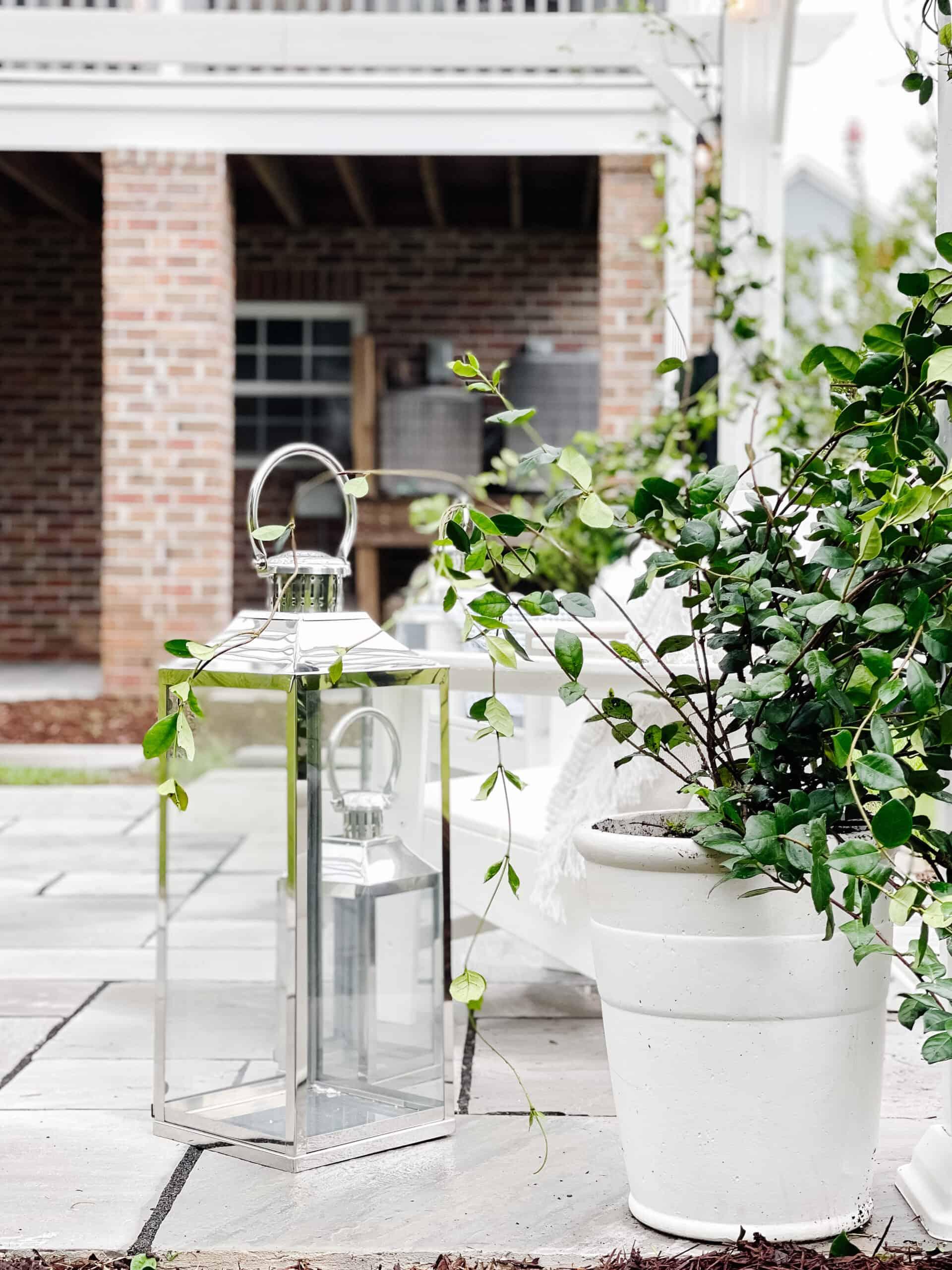 Jasmine vine climbing from a white planter onto a pergola, with chrome outdoor lanterns.