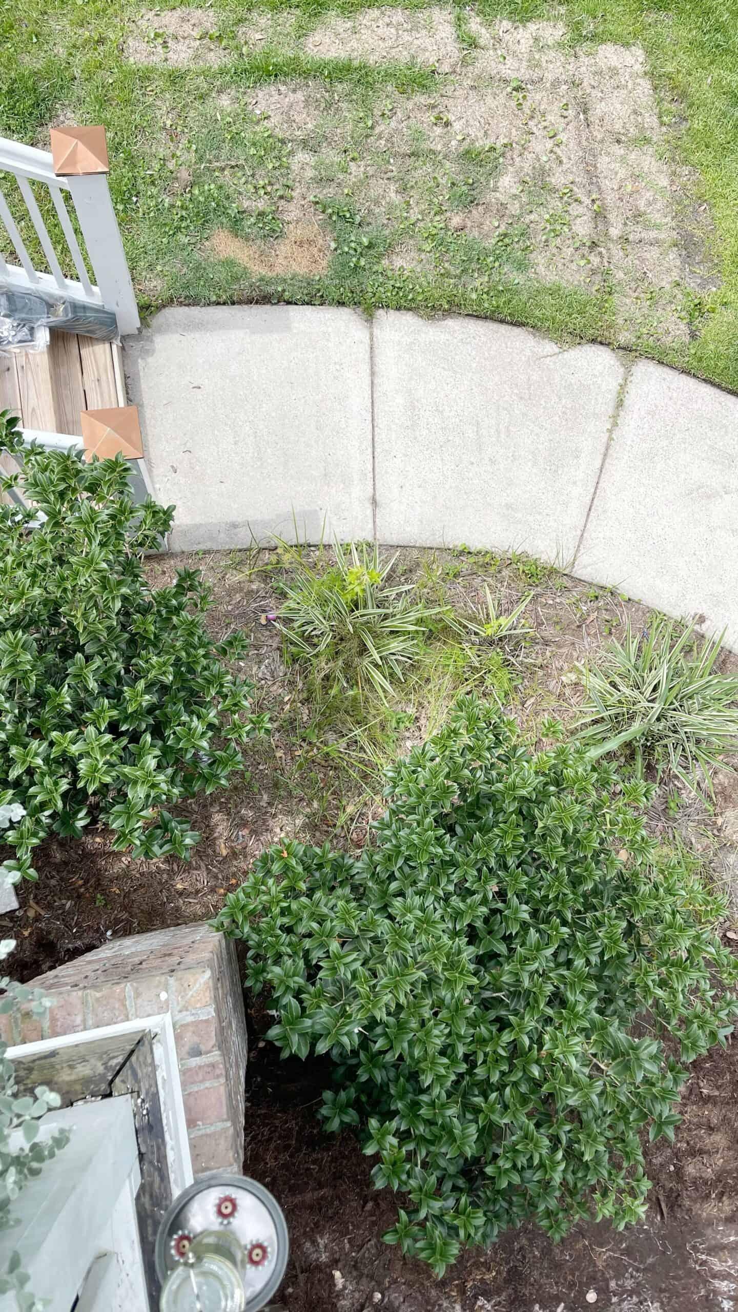 Backyard walkway with overgrown flowerbed and weeds.